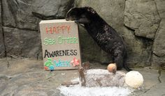 1000+ images about Sea Otters on Pinterest | Swim, Happenings and The aquarium