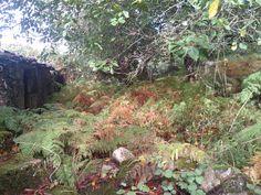 El bosque gallego en Calvelo de Lamamá, (Orense), por donde la Santa Compaña, jabalíes, lobos, demos, e trasgos campan a sus anchas.