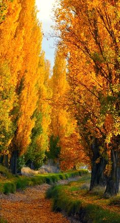 beautiful trees....You cant tell me Autumn doesn't take your breath away
