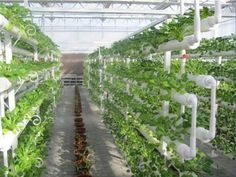Vertical Cultivation: What's Vertical Cultivation? Vertical Cultivation in easy words is, 'farms piled together with one another unlike traditional Agriculture Farming, Landscaping, Plants, Yard Landscaping, Plant, Landscape Architecture, Garden Design, Planets, Landscape Design