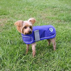 Kensington Dog Coat, XX-Large >>> Don't get left behind, see this great cat product : Cat Apparel Small Dog Coats, Large Dogs, Pet Dogs, Pets, Cat Sweaters, Dog Id Tags, Dog Jacket, Dog Diapers, Cat Accessories