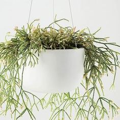 Raw Earth Hanging Planter - Chalk White– Pigment Large Hanging Planters, Hanging Plants, Contemporary Bowls, Tall Ceilings, Perfect Plants, Plant Species, Potting Soil, Modern Spaces