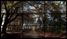 The Four Seasons - Autumn, Woldgate Woods, 2010