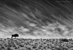 Monochrome: Simply Dramatic or Dramatically Simple?   Nature TTL