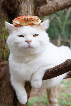 蟹兜 |のせ猫オフィシャルブログ Powered by Ameba
