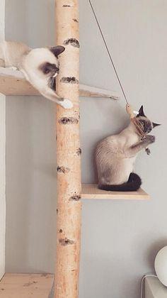 Home - Birkendoc Rustic Cat Furniture, Diy Cat Tree, Cat Cages, Cat Room, Diy Stuffed Animals, Animals And Pets, Living Room Designs, Light Colors, Birch