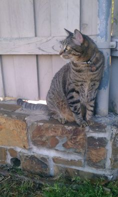 Artsy photo, looking away from the camera, brick wall, weathered wood: Crosby is a hipster. #CrosbyTheCrazyChristmasCat