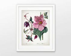 2a967c7e084 Hibiscus Flower Antique Botanical Art Print by QuantumPrints Décor Antique