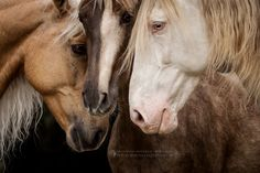 Awe, snuggled horse faces.
