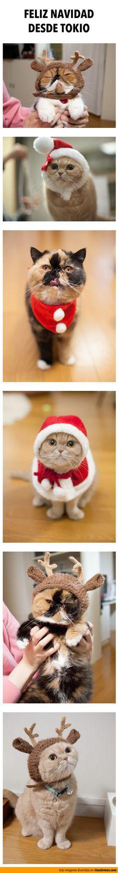 Feliz Navidad desde Tokio.