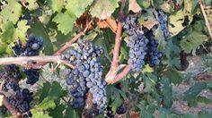 VINODABERE / Winetodrink  /  酒饮 /  вино пить / vinho para beber: Incontro con GIANFRANCO FINO