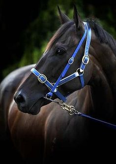 Black Caviar, so special!
