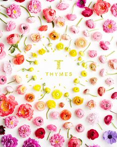 Thymes Catalog Summe