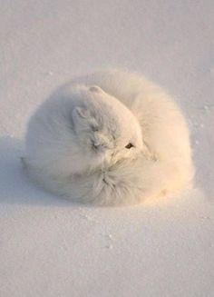 The 15 Most Fluffy And Cute Animals In The World | BlazePress