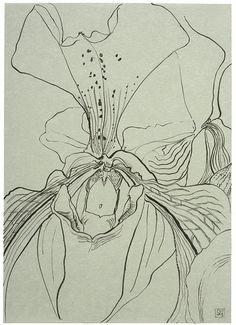 Sarah Graham, artist, botanical works on paper, 2008 to present. Botanical Drawings, Botanical Art, Botanical Illustration, Illustration Art, Sarah Graham, Big Wall Art, Small Art, Art Themes, Art Tutorials