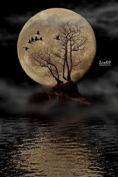 Full moon over water. Full Moon Rising, Moon Rise, Goose Tattoo, Luna Moon, Gifs, Sun Moon Stars, Moon Lovers, Over The Moon, Dark Fantasy