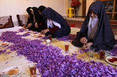 The world's most expensive spice is Saffron. Only one of 75 species of crocus can produce saffron and 90% of it comes from Iran selling for as much as $1,600 to $5,000 per pound. Collecting the 3 stigmas from each individual Saffron Crocus blossom by hand is insanely labor intensive. Each pound of saffron requires about 225,000 stigmas; at three per plant, that's about 75,000 plants grown over an area the size of a football field. This one-pound harvest takes the better part of a week.