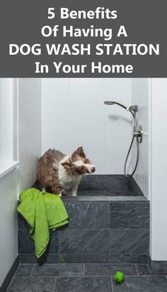 5 Benefits Of Having A Dog Wash Station In Your Home                                                                                                                                                                                 More