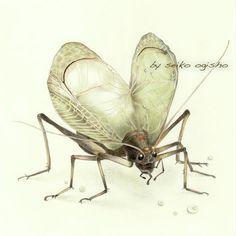 鈴虫 Pictures Of Insects, Pictures To Draw, Animals, Animales, Animaux, Animais, Animal