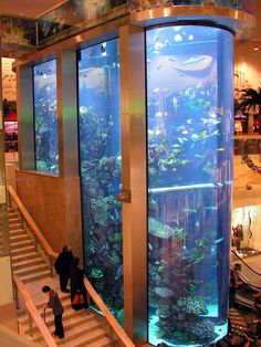 This is the largest aquarium and the highest in the Baltic States!