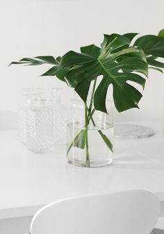 monstera leaves in a clear glass vase Ikebana, Monstera Deliciosa, Monstera Leaves, Philodendron Monstera, Deco Floral, Arte Floral, Plantas Indoor, Marimo Moss Ball, Inspire Me Home Decor