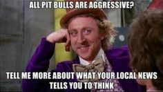 Love it. Love pit bulls :) Educate yourself before you judge them ALL.