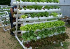How to build small PVC pipe vertical vegetable garden - Hydroponics
