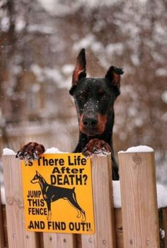 Gorgeous dog, funny sign