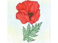 Flower, Poppy, American Legion | Baker Creek Heirloom Seed Co