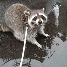 """""""I found these grapes in a puddle! Best day ever!"""" 