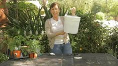 Video: How to Build Your Own Upside Down Tomato Plant