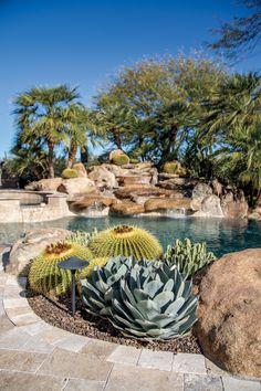 Desert Landscape Backyard, High Desert Landscaping, Landscaping Around Pool, Arizona Landscaping, Backyard Pool Landscaping, Dessert Landscaping, Seed Tape, Pool Plants, Desert Plants