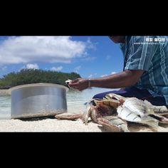 [#itsyourtrip] 몰디브 로컬섬 디구라 라군에서 즐기는 그물 낚시 http://blog.naver.com/mode5683/220700380527 #몰디브, #몰디브낚시, #낚시, #리얼몰디브, #모하메드이야기, #몰디브여행, #몰디브로컬섬