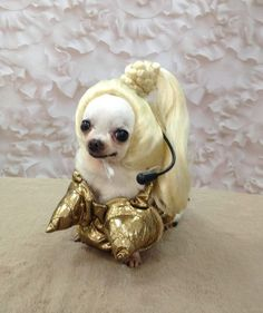 """Pop Queen"" costumes by California Costumes from 30 Amazing Pet Halloween Costume Ideas"