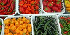 How to easily Freeze Bell or Sweet Peppers (Green, Red, Yellow, Orange, Purple), as well as Hot Peppers