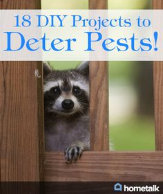 18 DIY Projects to Deter Pests!
