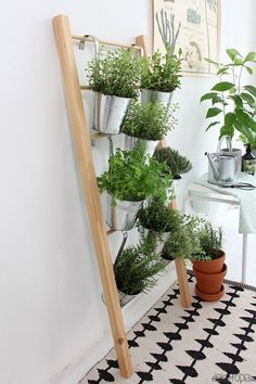 Build herbal ladder for yourself inside - DIY instructions: Build herbal ladder yourself. Space-saving plant idea for kitchen herbs -