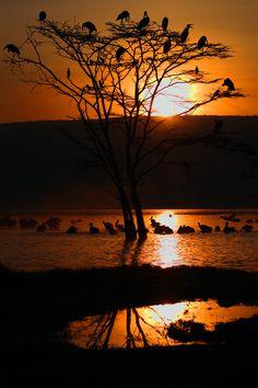 Sunrise by Steven Yoon