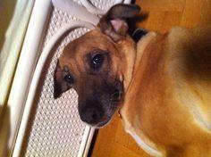 My Dog Melanie
