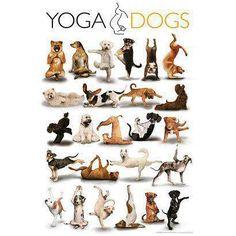 Yoga para o seu cachorro.  Saiba como fazer mais coisas em http://www.comofazer.org
