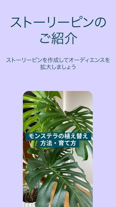 Japanese Kanji, Love Home, B & B, Plant Leaves, Flora, Fashion Dresses, Knowledge, Invitations, Marketing