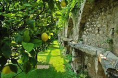 Lemons in the park. #lemons #limonaia #villafeltrinelli #lake #garda #privatepark #grandhotel