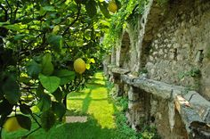 Lemons in the park. #lemons #limonaia #villafeltrinelli #lake #garda #privatepark #grandhotel