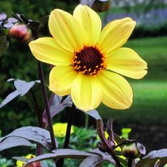 #Longwood #LongwoodGardens #Summer #Garden #Flower #Flowers #Plant #Plants #Pretty #Beauty #Beautiful #Outside #Nature #MotherNature #Green #Yellow