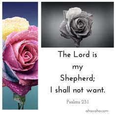Daily Bible Verses And Scripture For Your Spiritual Journey. Shadow Of The Almighty, Bible Scriptures, Bible Quotes, Lord Is My Shepherd, Psalm 23, Daily Bible, Spiritual Inspiration, True Words, Trust God