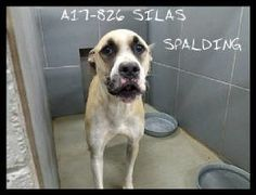 Dogs « Spalding County Animal Shelter