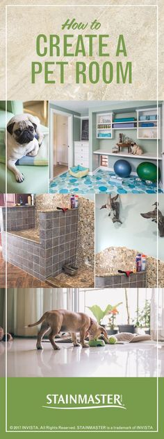 One superbly decorated place where your pets can chill, eat, sleep, and shower? It's possible! Come see these rooms made just for pets.