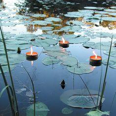 Image result for floating candles on pond