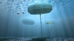 Petition · Secretary of State for Communities and Local Government, Eric Pickles -: Stop The Proposed Development By Perpetuus Tidal Energy Centre Ltd And Save Our Coastal Environment On The South Coast Of The Isle Of Wight · Change.org