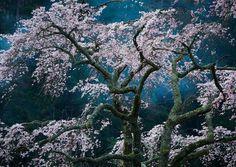 #15 Fascination, Japan (© Katsuyoshi Nakahara)